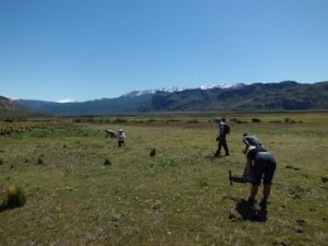 Volunteering in Patagonia; Alain's experience with Conservacion Patagonia